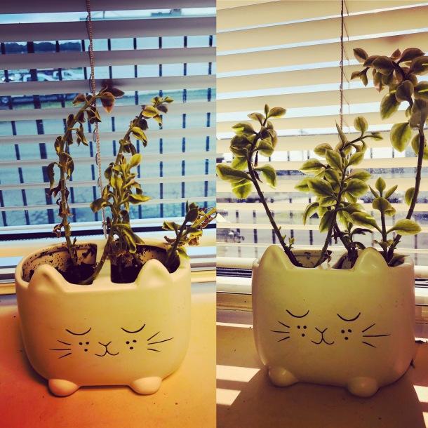 plantpic